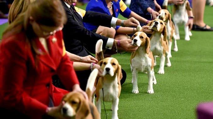 Выставка собак в Центральном парке